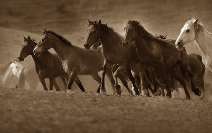 pr-57-Federally-Protected-Wild-Horses-Perish