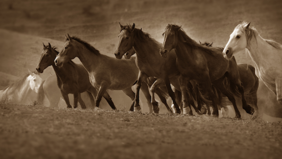 Return to Freedom Wild Horse Ranger Steve Paige is on site to bear witness-August 8, 2014.