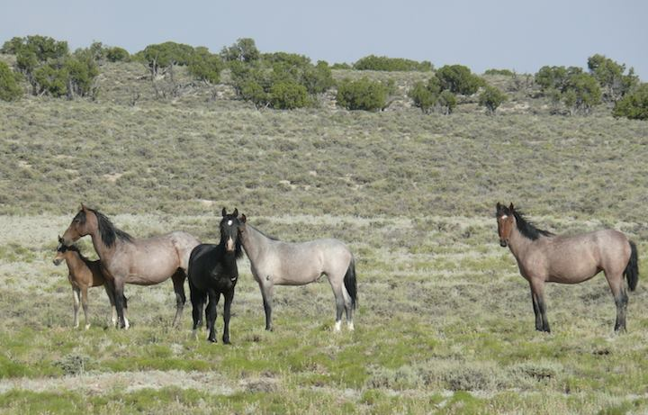 Wild Horse Rangers- Teens Take A Walk On The Wild Side!
