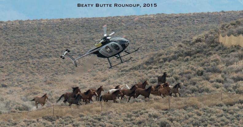 Beaty Butte Roundup, November 2015