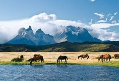 Wild horses in Chile
