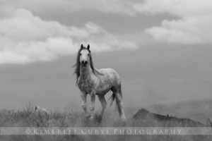 Saylor Creek Stallion, Idaho Photo: Kimerlee Curyl