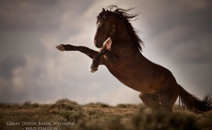 Wild Stallion, Wyoming Photo: Kimerlee Curyl