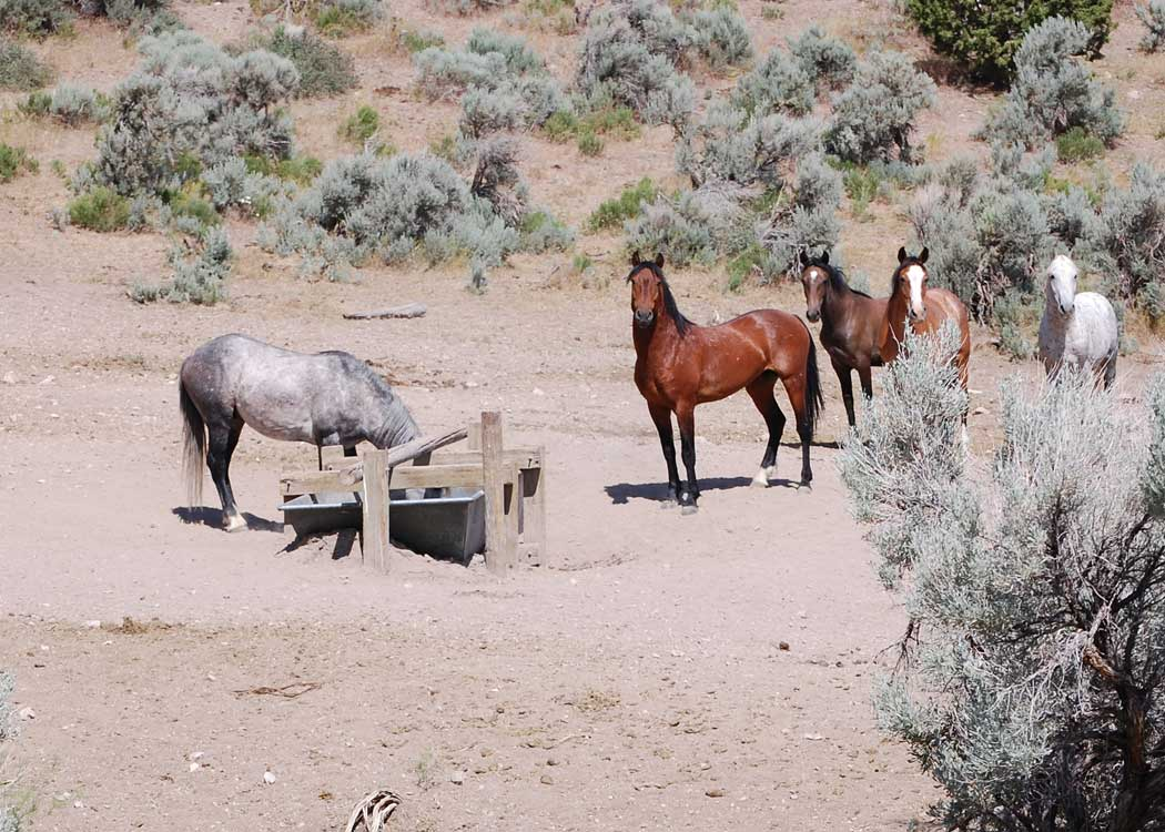 Horses at Maverick Medicine Herd Management Area. BLM 2011 file photo.