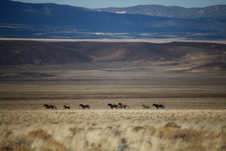 Elko Nevada Range, 2016 Photo: RTF