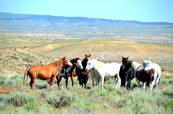 Sand Wash Basin horses stand together last June. Craig Daily Press file photo.