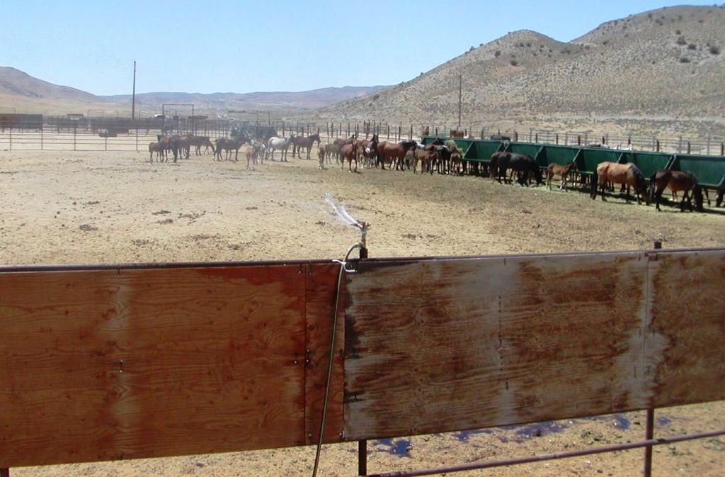 The Palomino Valley Wild Horse and Burro Center. BLM file photo.