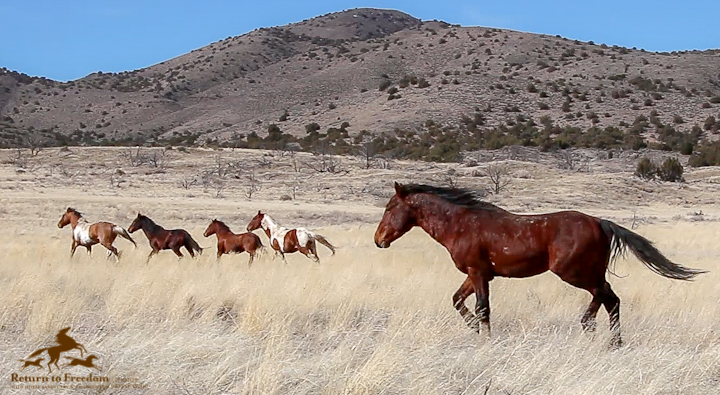 Senate appropriators pick fights on wild horses