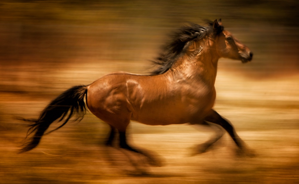 RTF statement on protective language for wild horses in Senate bill