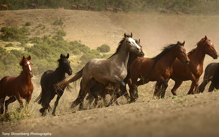 Senate takes crucial step toward protecting wild horses!