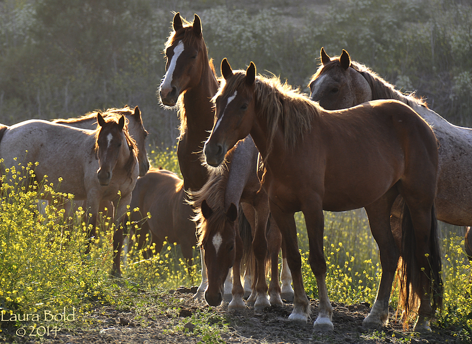 Webinar: 'Wild, Controlled, or Free: Why Population Management of Horses on Public Lands Matters'