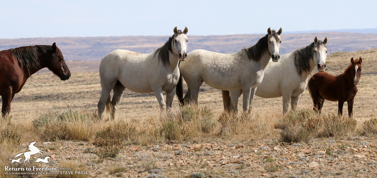 House members pen letter supporting ban on horse slaughter
