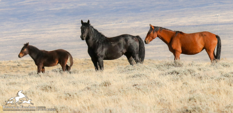 Will a Senate bill save thousands of wild horses, burros from being euthanized?
