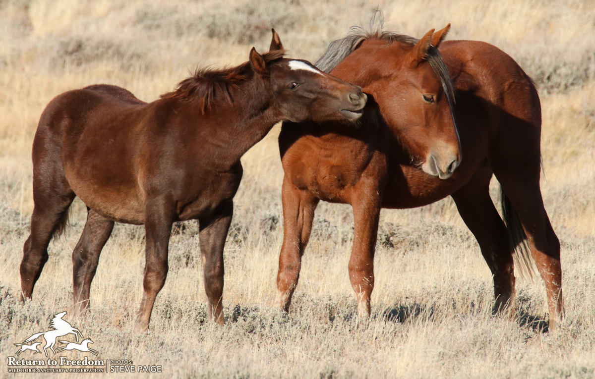 Members of Congress call for wild horse protections, use of fertility control